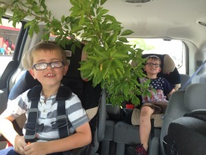 Boys plus plum tree, on our way home from the garden center.  No pix of the finished product, sadly.