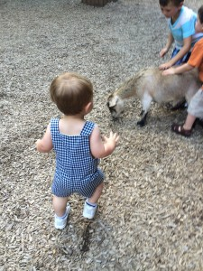 The petting zoo was my favorite.  Baby plus baby goats!  Augh!