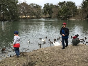 Duck feeding on a chilly Nola day