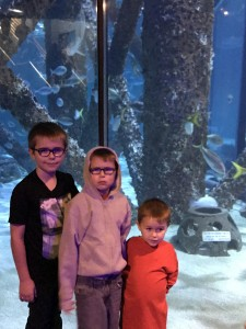 Aquarium trip when dad's out of town.  Liam is clearly upset with me about something.